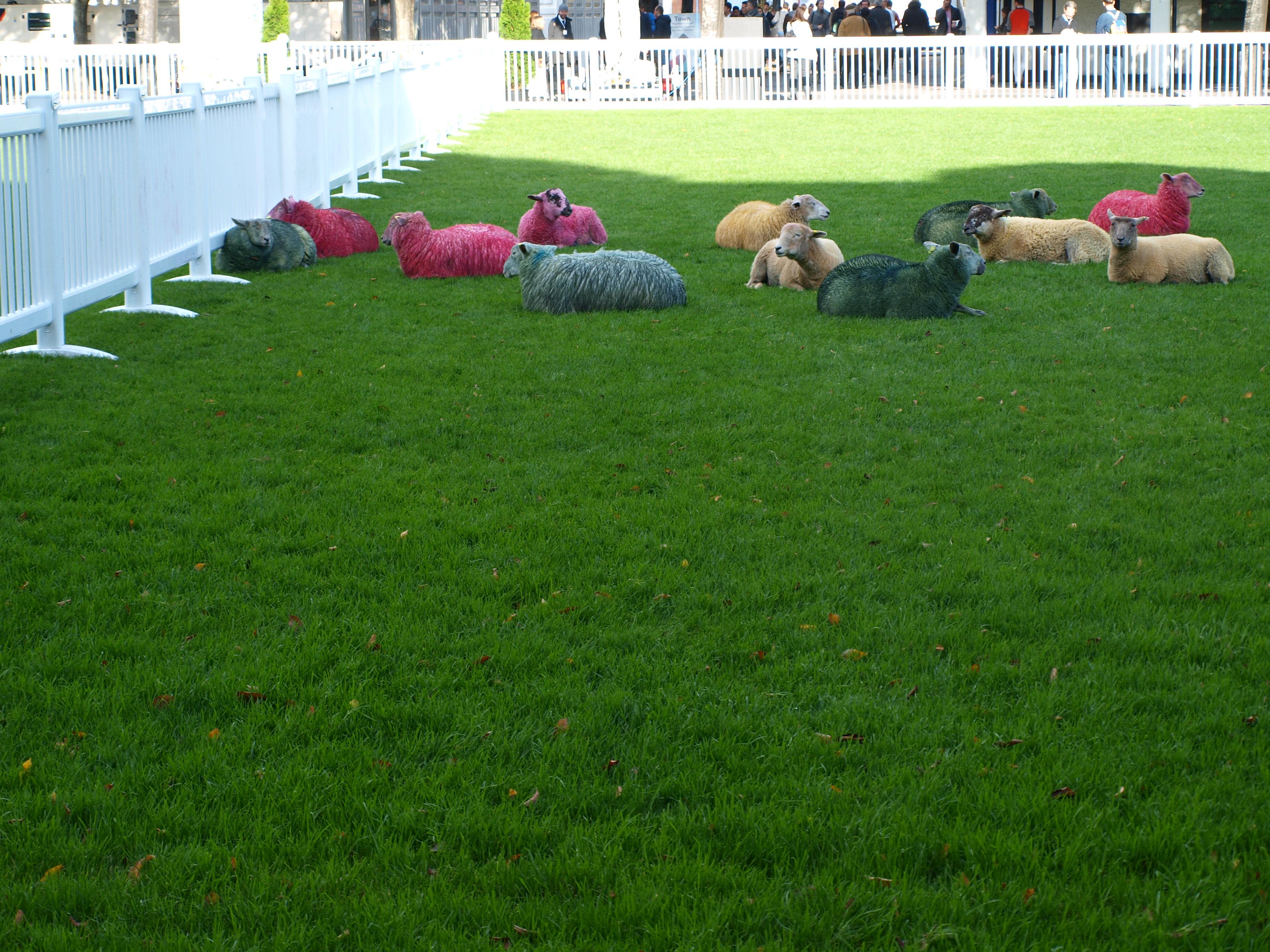 Zatím nevíme proč, ale jsou tu ovce a navíc je někdo pomaloval…