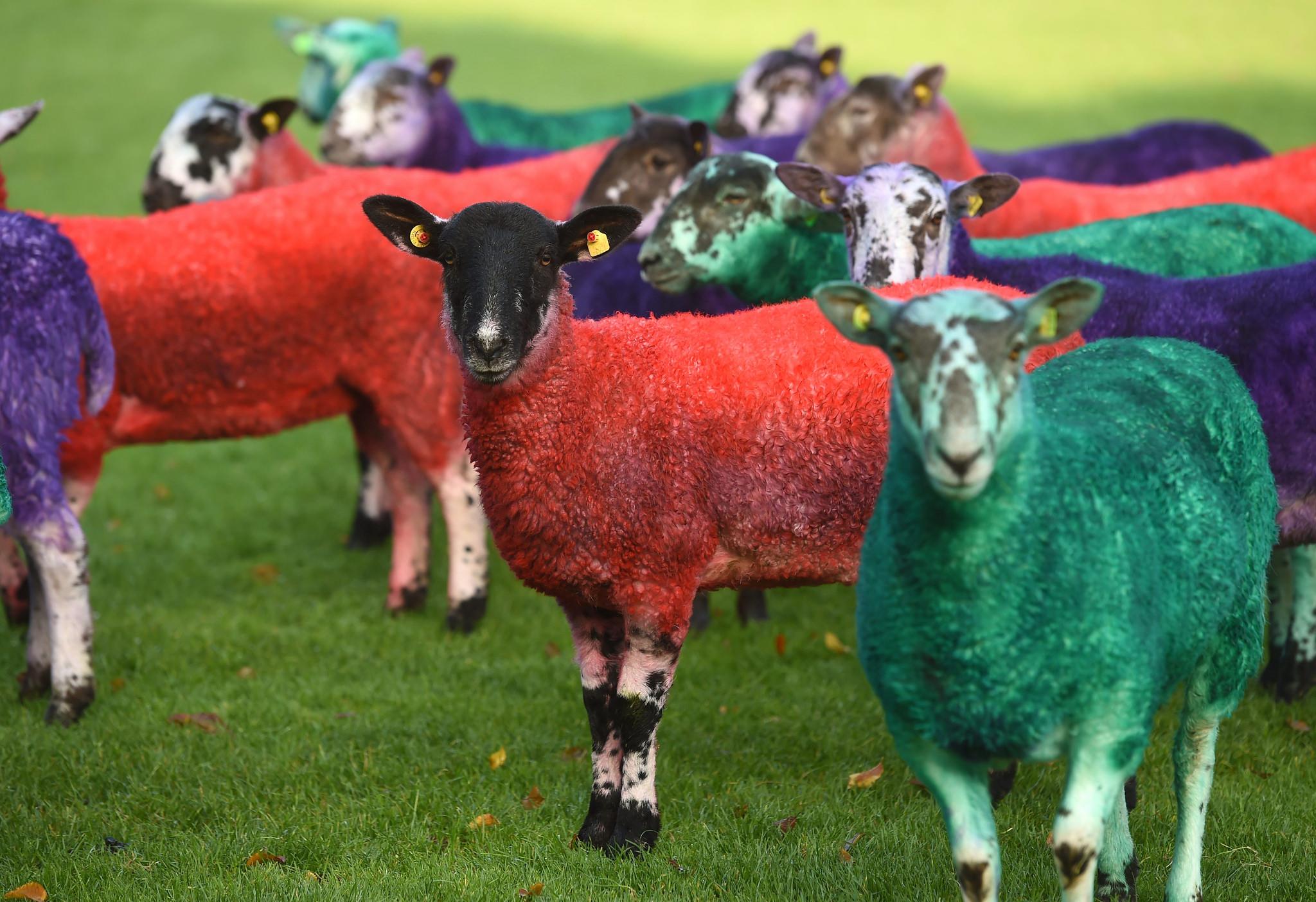 A na závěr barevné ovečky! Protože ty nemohou na akci Web Summitu chybět :)