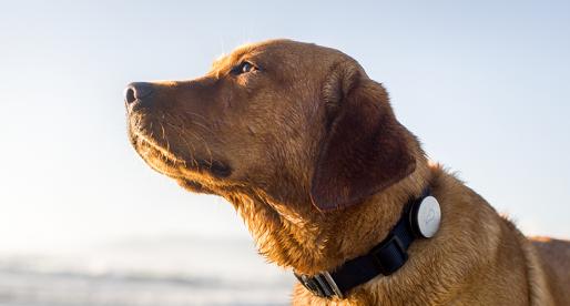 Startup vyrábějící chytré fitness náramky pro psy potvrdil svojí akvizici za 2,4 miliardy