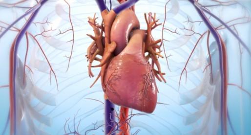 Startupu BioLife4D se podařilo díky 3D tiskárně vytvořit použitelnou srdeční tkáň