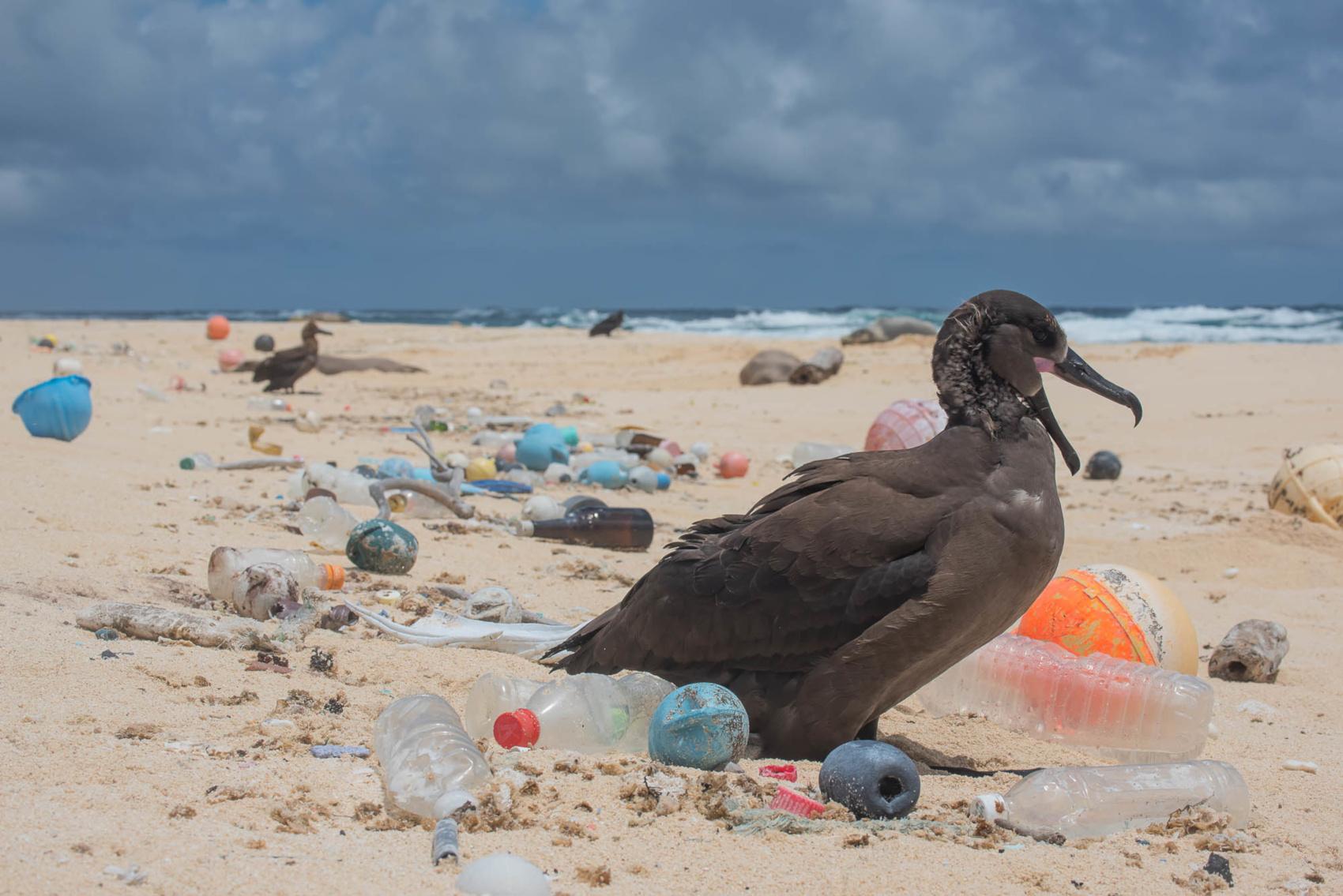 Častějším typem plastového odpadu než PET lahve je podle Greenpeace polystyren, který je například součástí kelímků na kávu