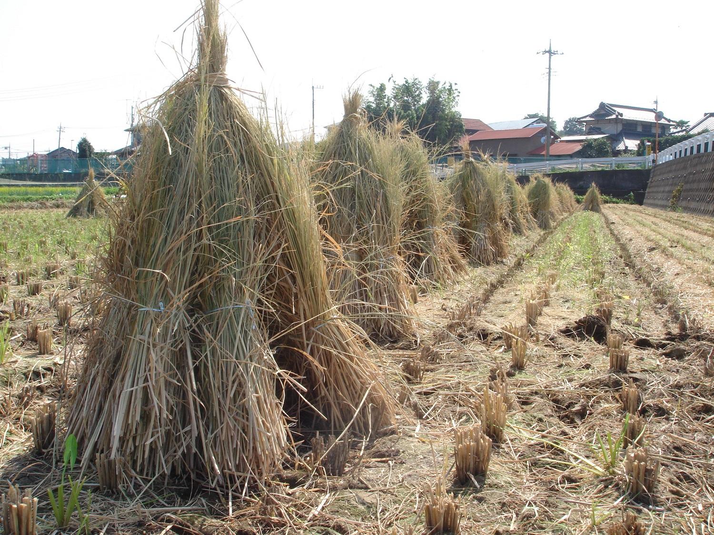 Sběr rýžové slámy má začít v oblasti okolo hlavního města Nové Dillí
