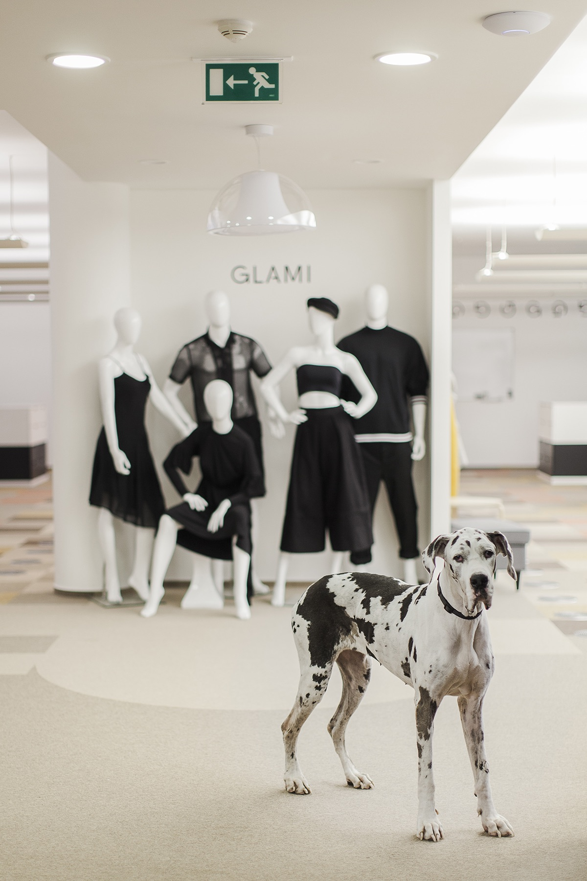 Kanceláře fashion startupu Glami