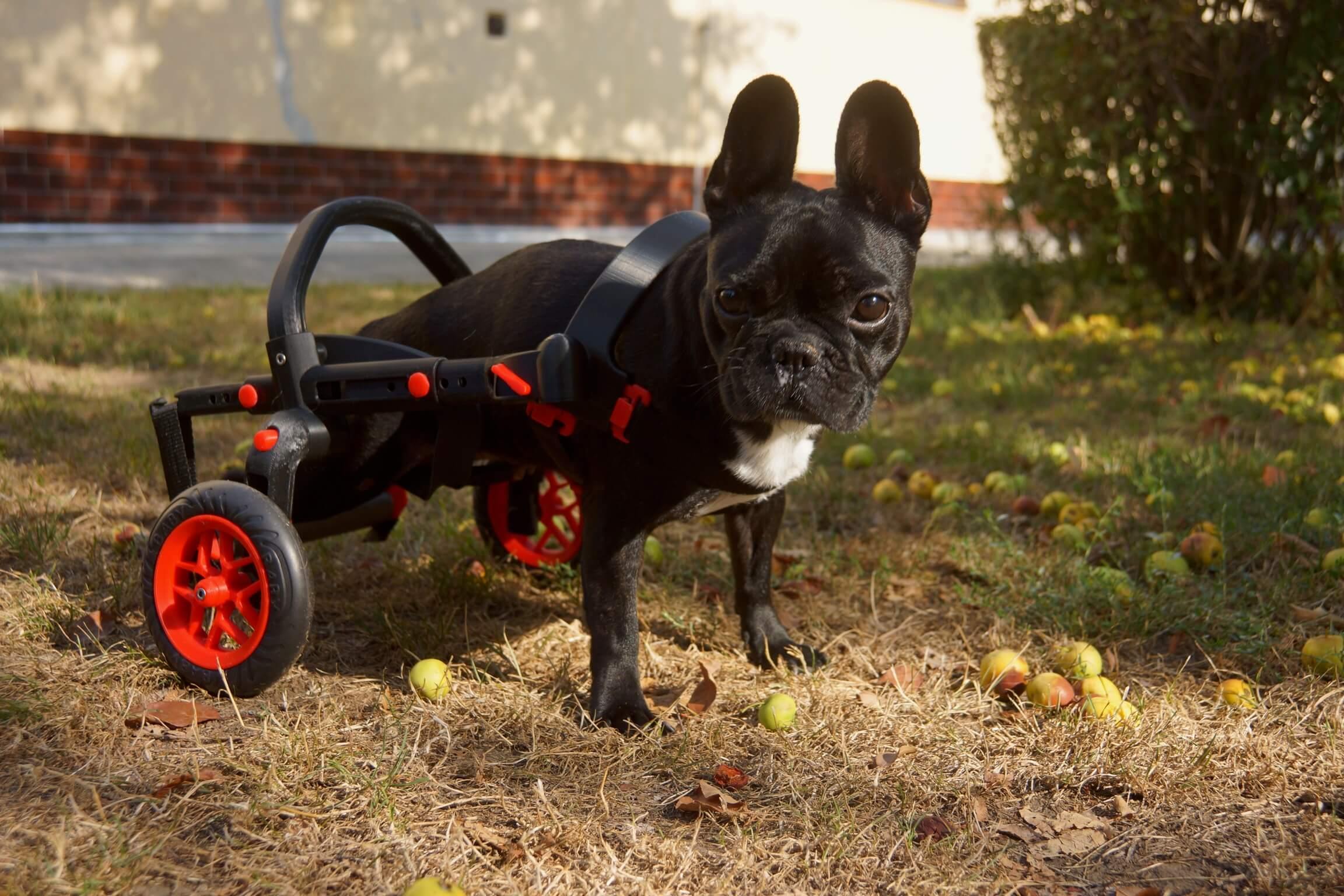 Model z nové řady PetSmall pro menší plemena psů