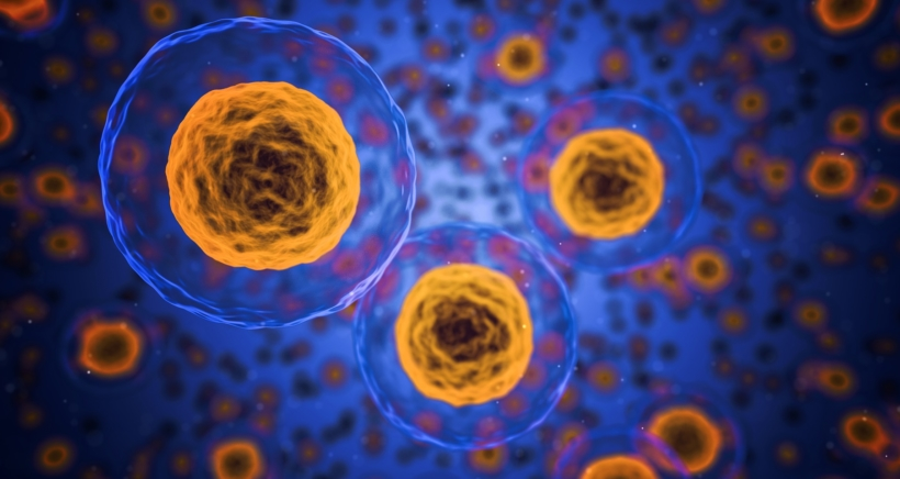 human-cells