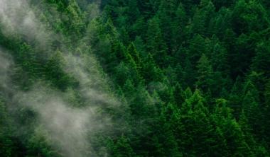 forest-unsplash