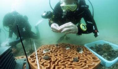 koraly6