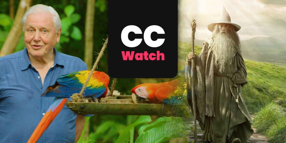ccwatch4